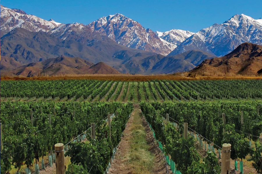 Mendoza and the Wine Region